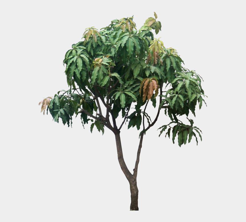 tropical tree clipart, Cartoons - #tropical #tree #mango #jungle #nature #plant - Mangifera Indica Png