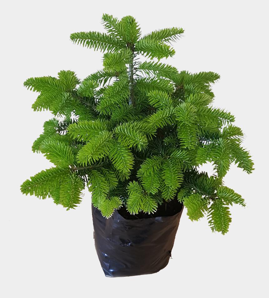 growing tree clipart, Cartoons - Pot Grown Christmas Trees - Bonsai