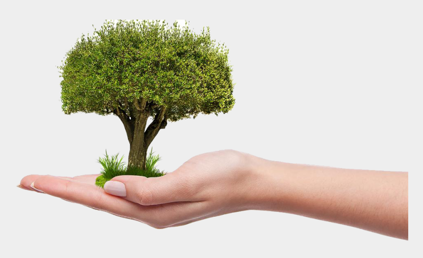 save trees clipart, Cartoons - Plant A Tree Png