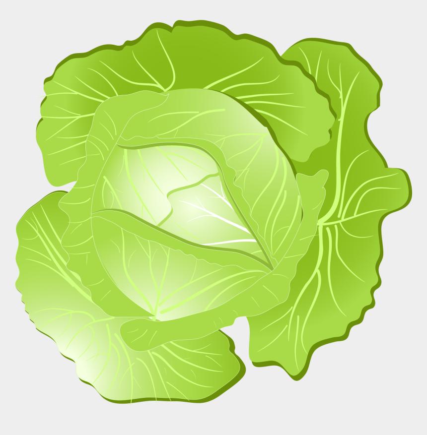 lettuce clipart png, Cartoons - Collard Greens