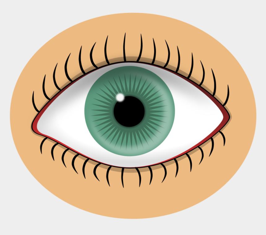 auge clipart, Cartoons - Auge Clipart Kostenlos - Sense Organs Eye Clipart