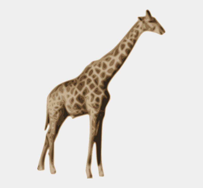 zoo animals clipart, Cartoons - Mammal Clipart Zoo Animal - National Geographic Us Tv Channel