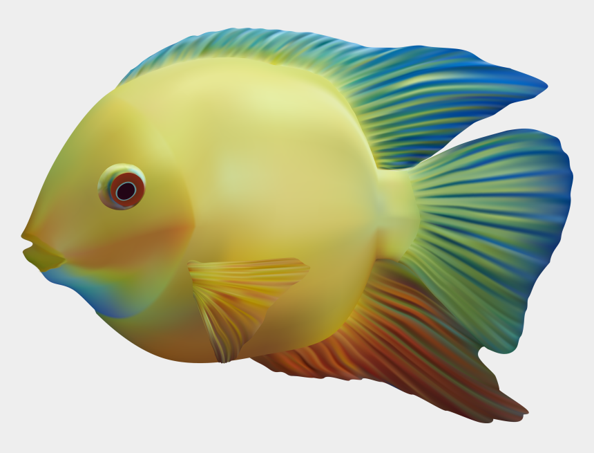 fish clipart images, Cartoons - Exotic Fish Png Clipart - Colour Fish Png
