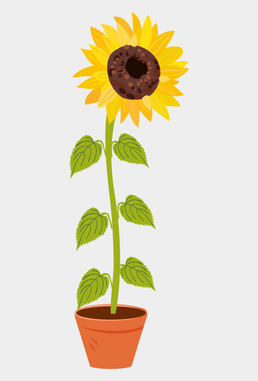 photosynthesis clip art, Cartoons - Sunflower And Bee Drawing