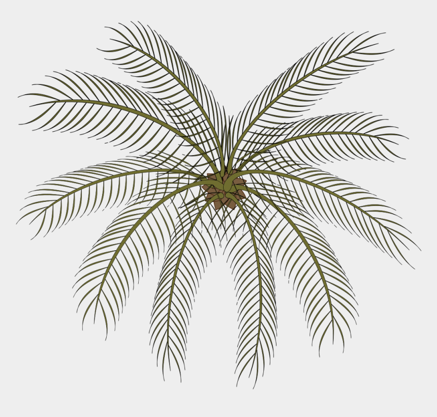 black palm tree clip art, Cartoons - Palm Small Top View Png