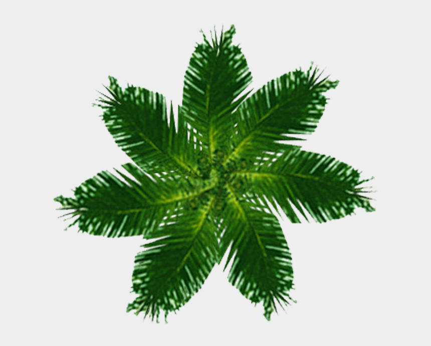 spindle clipart, Cartoons - Palm Tree Top View Png
