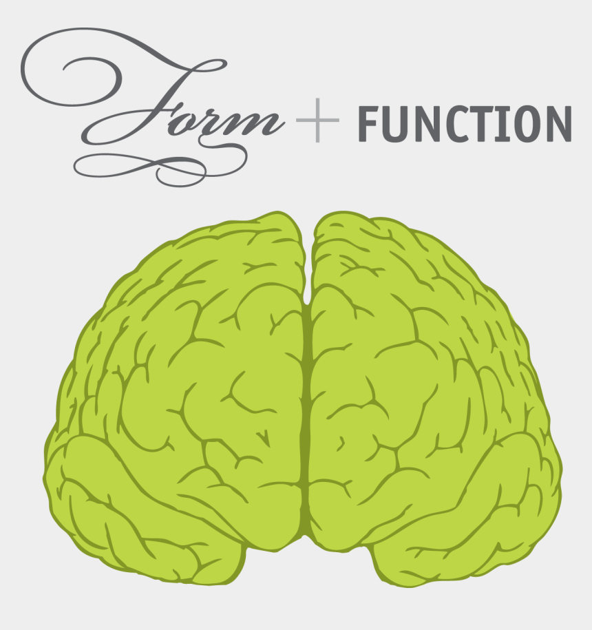 brain clipart front view, Cartoons - Brain Front View