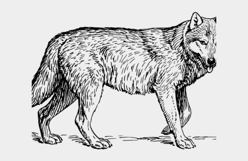 snow fox clipart, Cartoons - Wolf Animal Coloring Pages