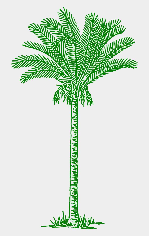 vintage tree clip art, Cartoons - Date Palm Tree Drawing
