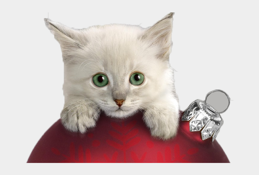 naughty girl clipart, Cartoons - Transparent Christmas Cat