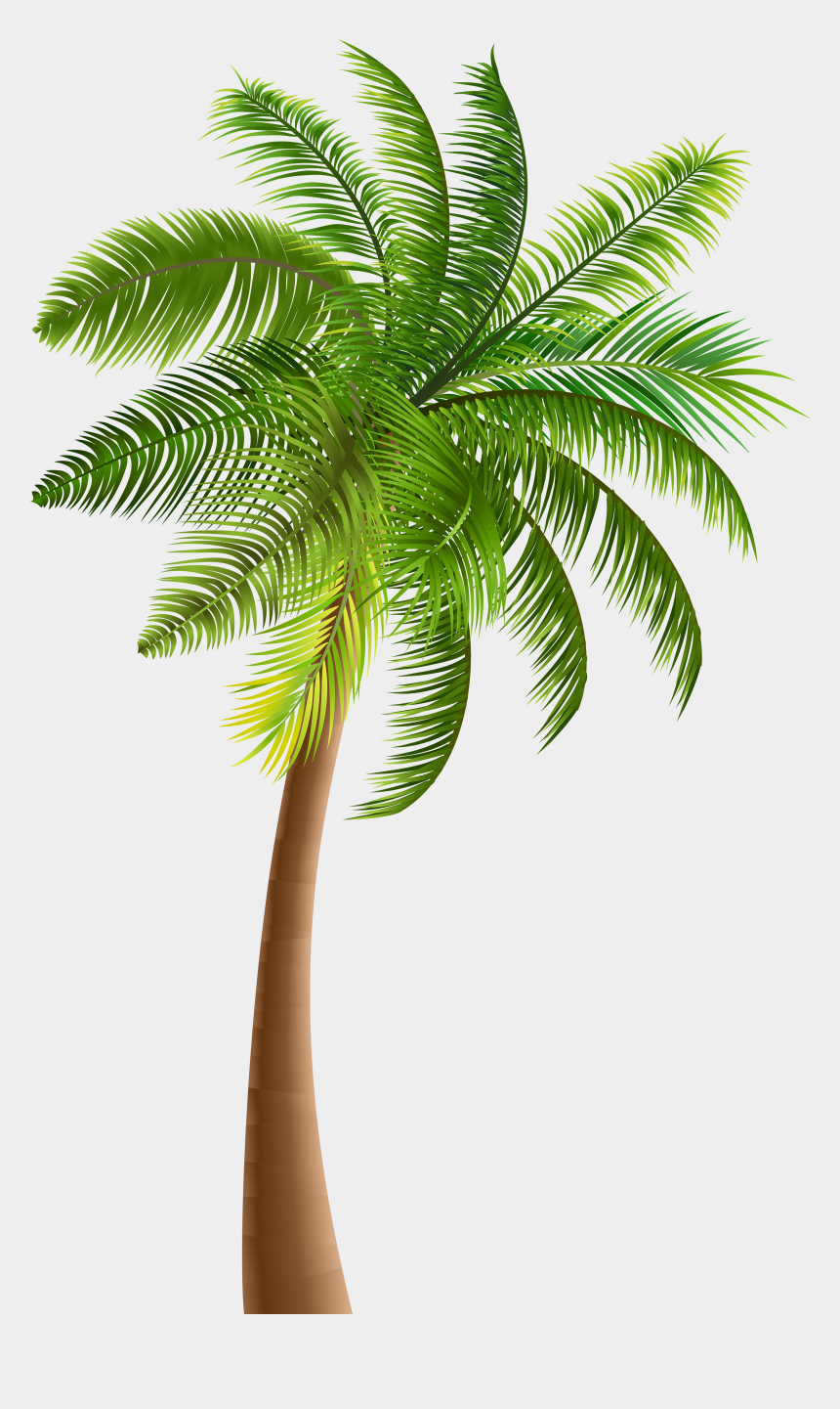 clip art of palm trees, Cartoons - Clipart Palm Tree Png