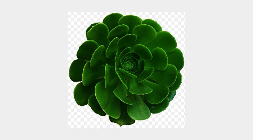 succulent plants clipart, Cartoons - Green Aesthetic Transparent