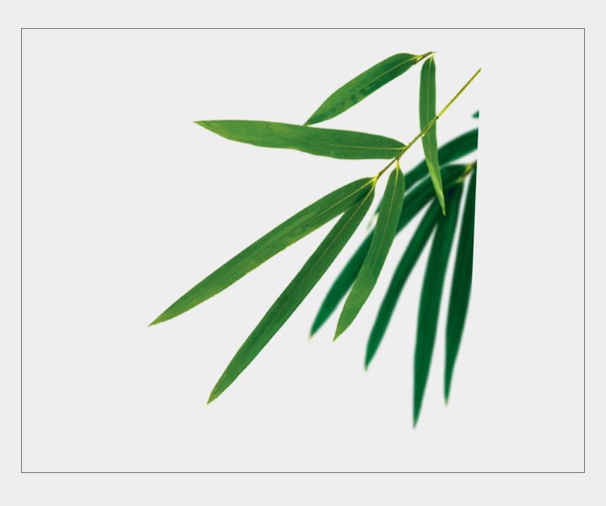 bamboo clipart border, Cartoons - 食品 广告