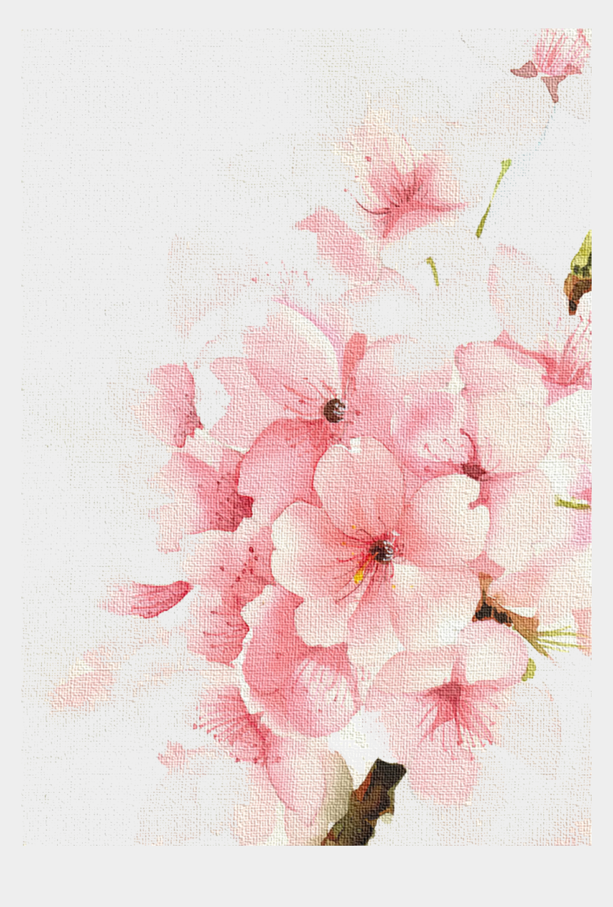 cherry blossom clipart, Cartoons - Cherry Watercolour Watercolor Blossoms Flowers Painting - Cherry Blossom Flower Painting