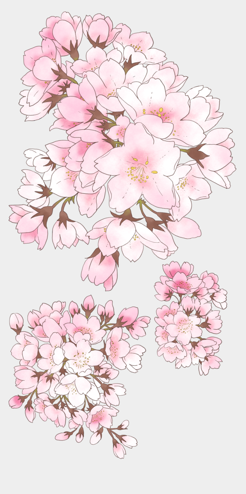 cherry blossom clipart, Cartoons - Watercolor Flowers Cherry Blossom Vector, Anime Cherry - Anime Cherry Blossom Drawing