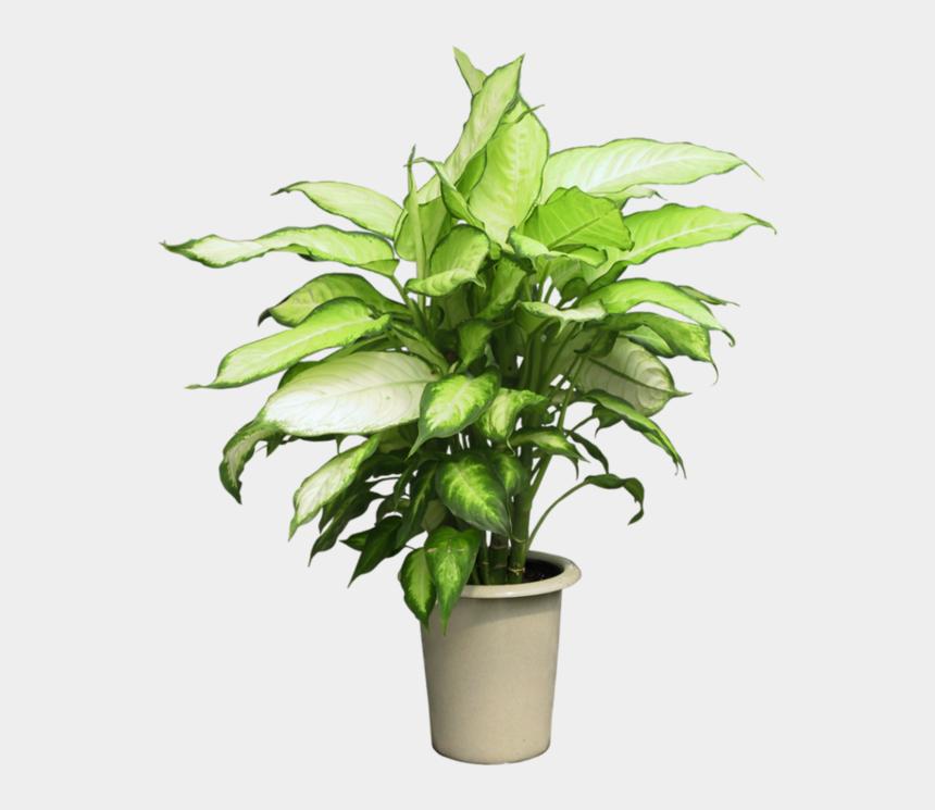 plants clipart, Cartoons - Pot Plant Clipart Group Plant - Potted Plants Png