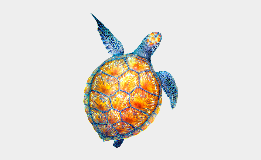 sea turtle clipart, Cartoons - Clipart Turtle Watercolor, Clipart Turtle Watercolor - Cool Turtle Drawings