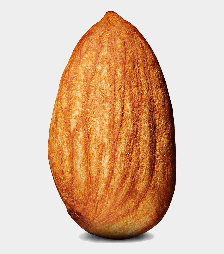 dry fruits clipart, Cartoons - Show Me The Tit On An Almond