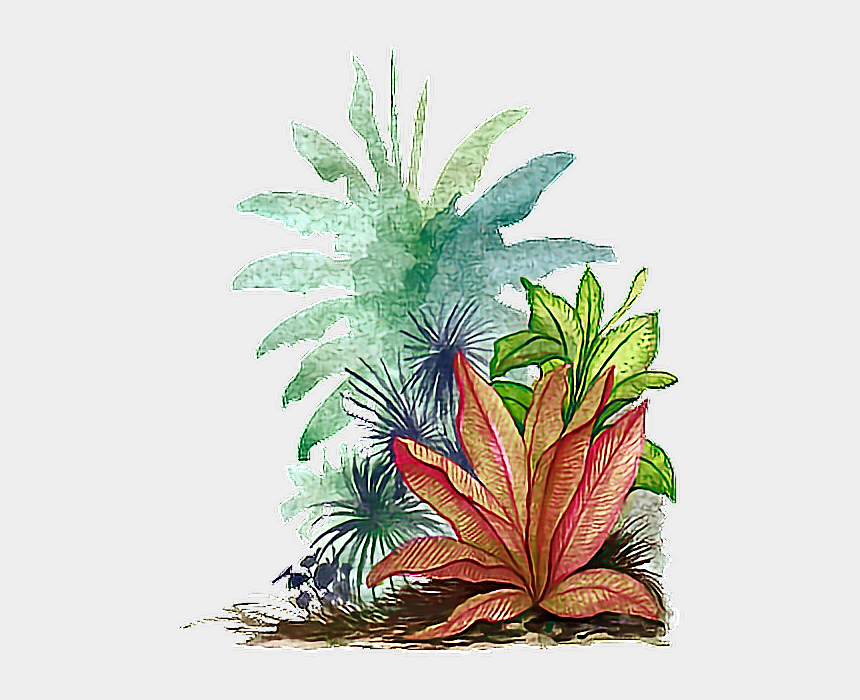 watercolor leaves clipart, Cartoons - Water Color Tropical Leave