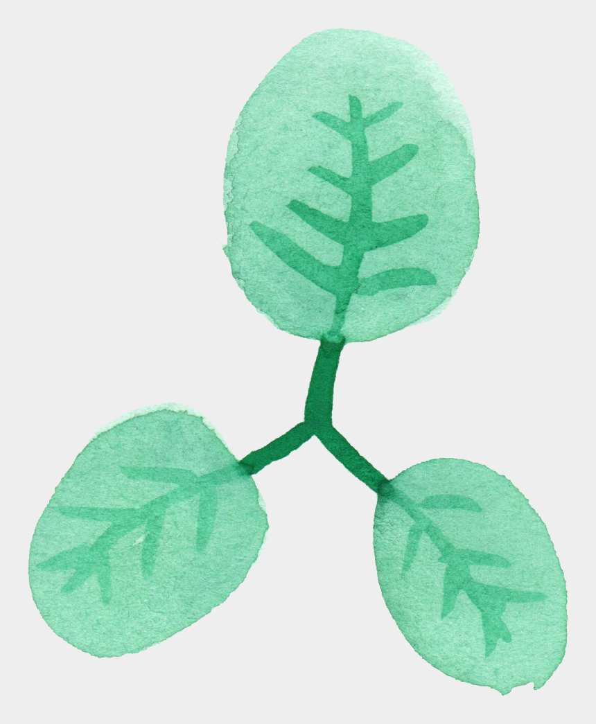 watercolor leaves clipart, Cartoons - Illustration