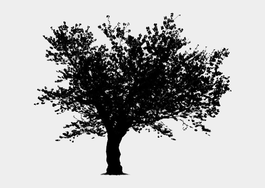 neem tree clipart, Cartoons - Tree Clipart Black And White No Background