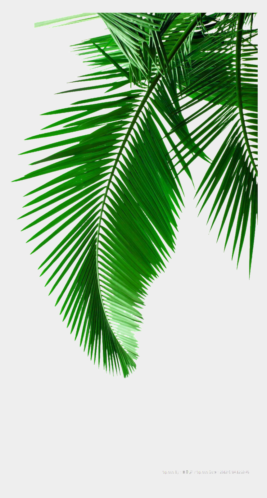 green leaf clip art, Cartoons - Black And White Palm Tree Leaves