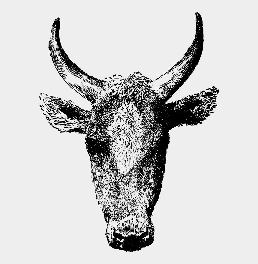 beef cow head clipart, Cartoons - Cabeça De Vaca Png