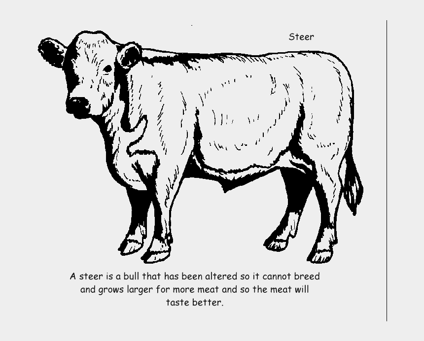 beef cow clipart black and white, Cartoons - Hereford Coloring Pages