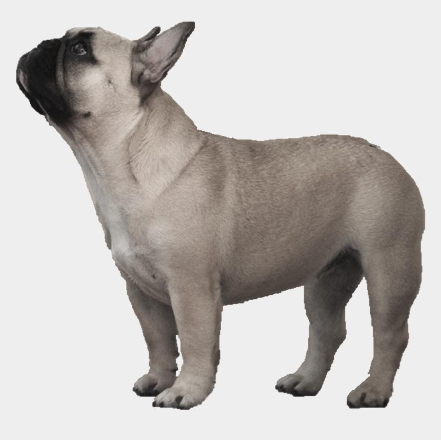 english bulldog clipart free, Cartoons - Transparent French Bulldog