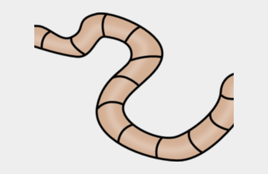 worm clipart, Cartoons - We Present To You A Worm Clipart Annelida - Outline Of A Worm