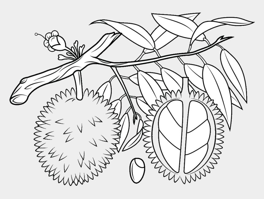 fruits clipart black and white, Cartoons - Durian Black And White Clip Art - Durian Tree Clip Art