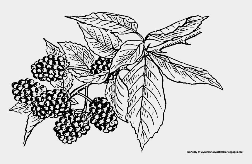 fruits clipart black and white, Cartoons - Blackberry Tree Clipart - Black And White Blackberries