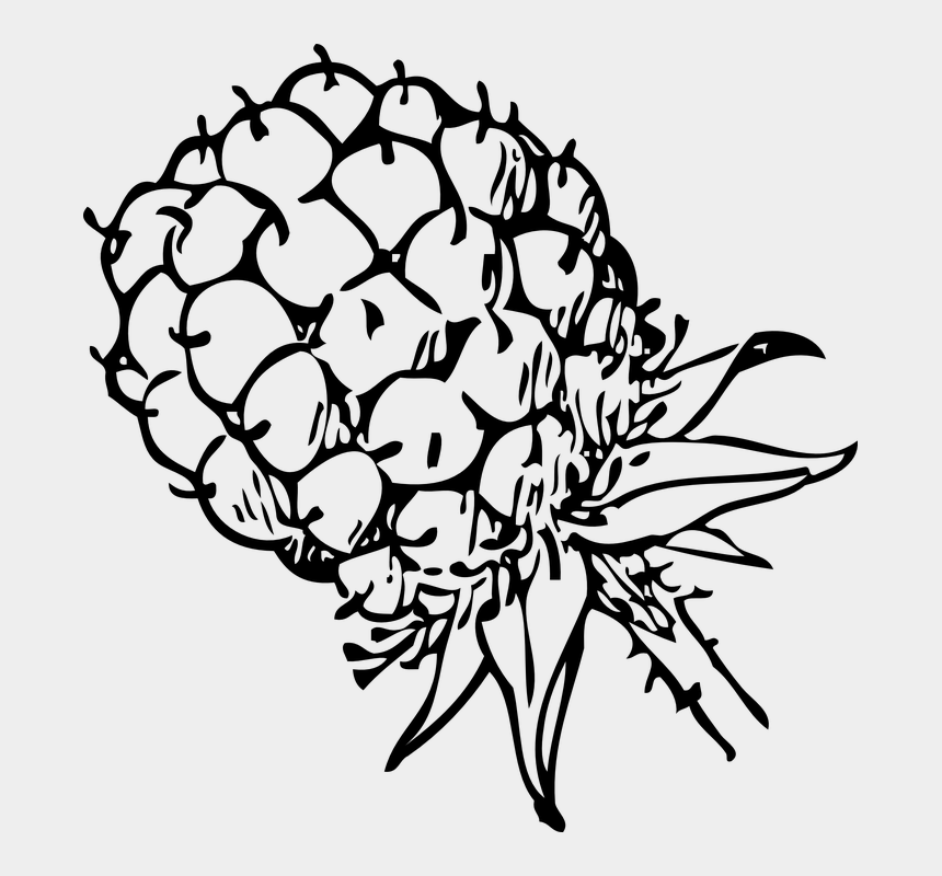 fruits clipart black and white, Cartoons - Raspberry, Berry, Blackberry, Food, Fruits, Sweet - Blackberry Clip Art