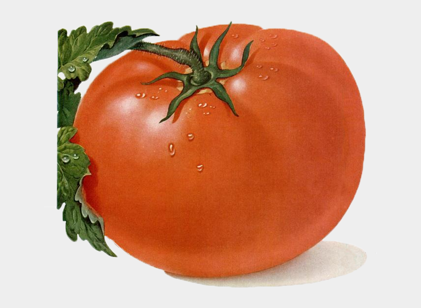 tomato clipart, Cartoons - Tomato Clipart Free Clip Art Images - Heirloom Tomato Png