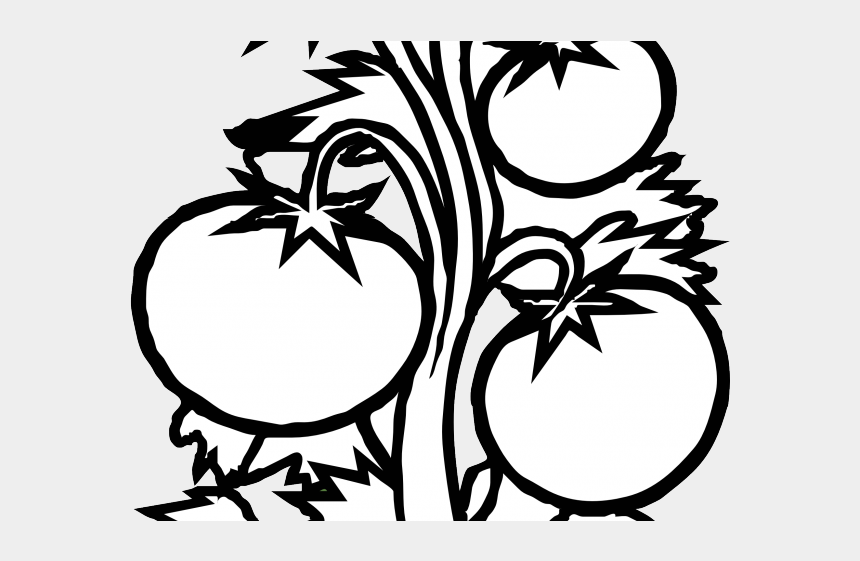 tomato clipart, Cartoons - Tomato Clipart Brinjal Plant - Tomato Plant Black And White
