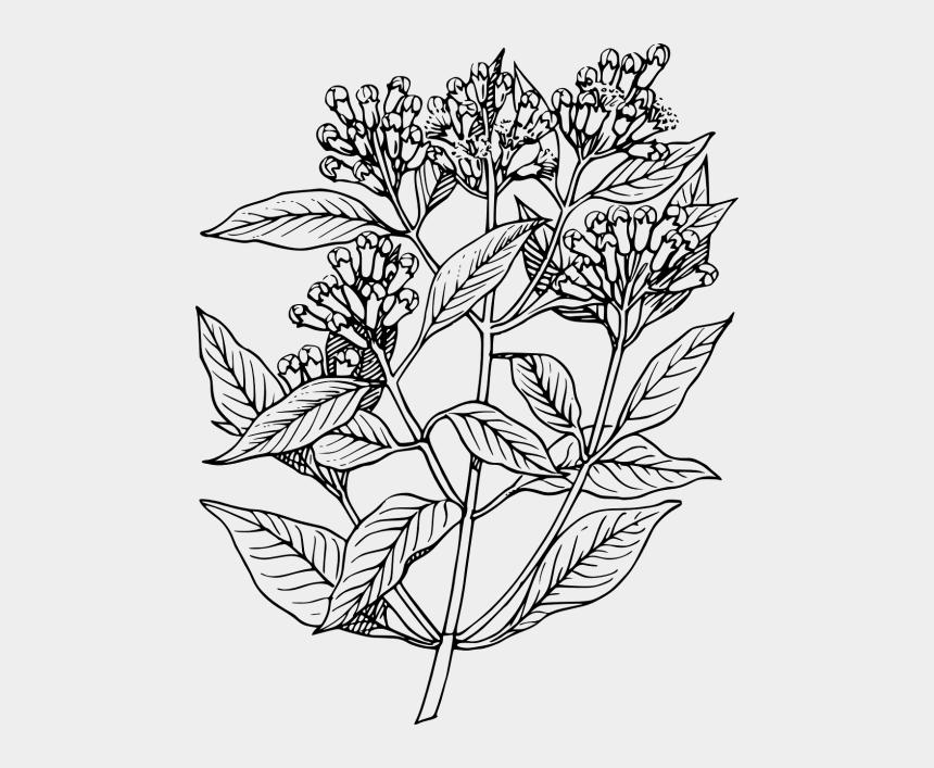 wild herbs clip art, Cartoons - Elder Flower Line Art