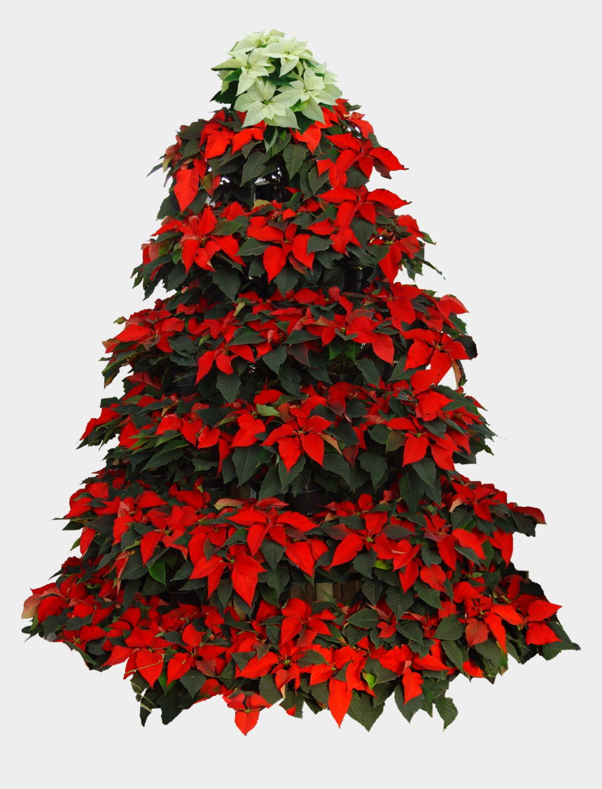 free clipart vintage christmas border, Cartoons - Christmas Tree Poinsettia Clipart