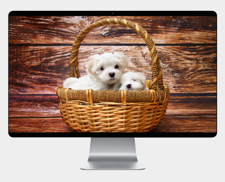 maltese puppy clipart, Cartoons - Cute Dog Profile