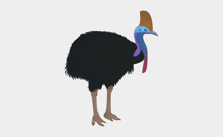 emu head clipart, Cartoons - Cassowary Clipart