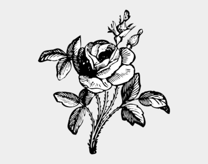 johnny automatic clipart, Cartoons - Black And White Flower Png