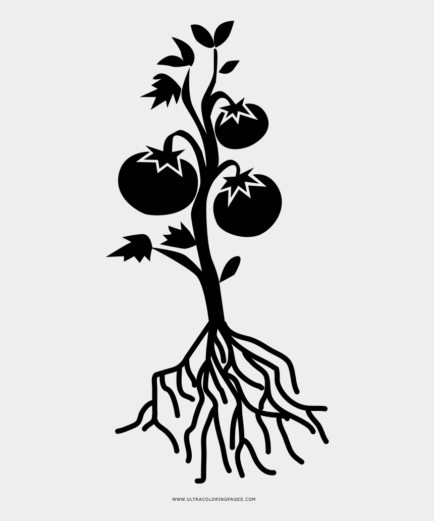 tomato slice clipart black and white, Cartoons - Tomato Plant Colouring Page