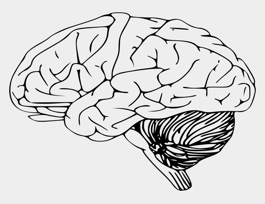 human brain images clipart, Cartoons - Brain Black And White Clipart