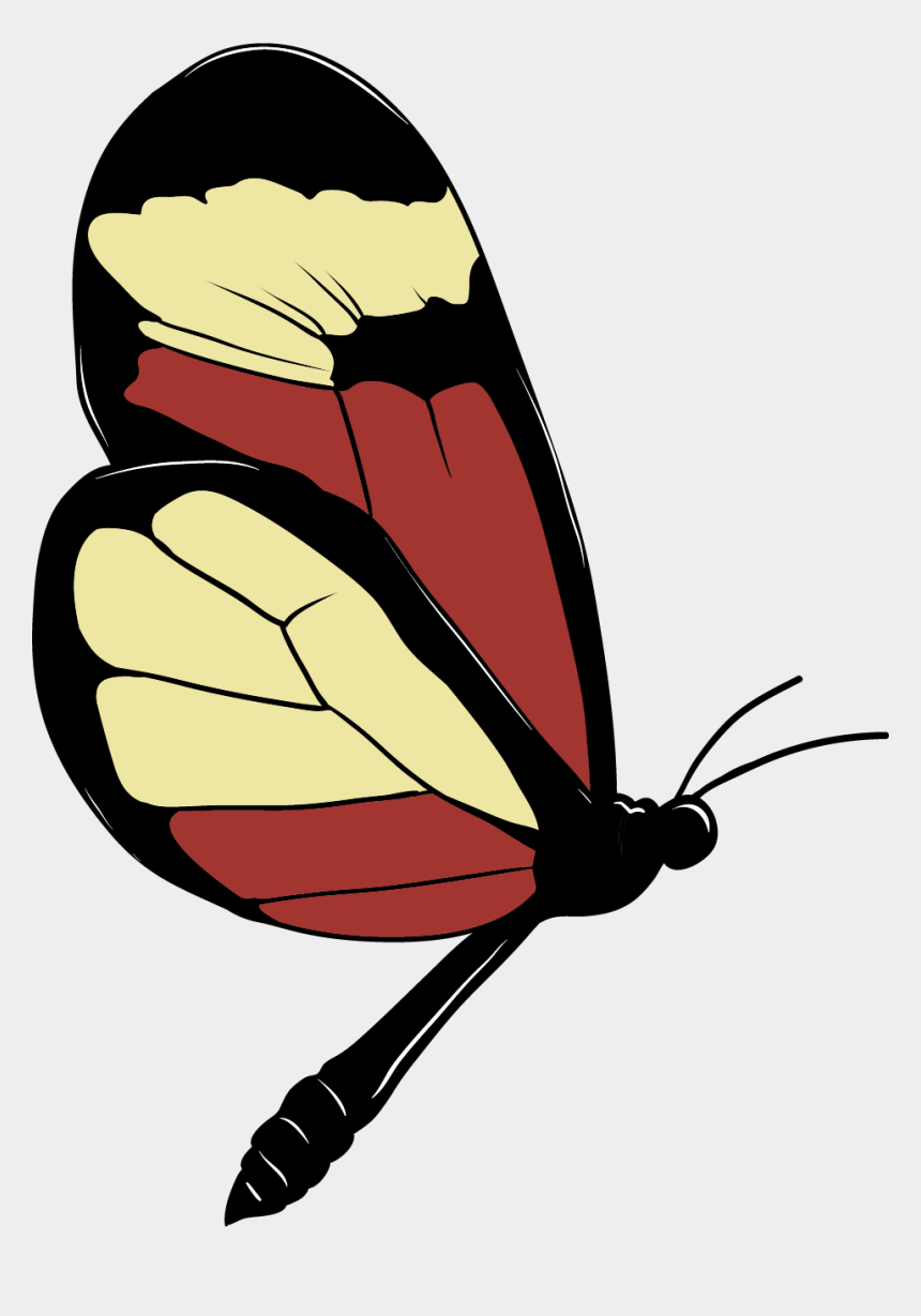caterpillars and butterflies clipart, Cartoons - Brush-footed Butterfly