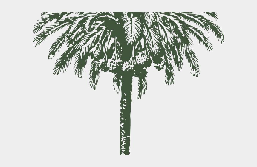 date palm clipart, Cartoons - Date Palm Tree Diameter