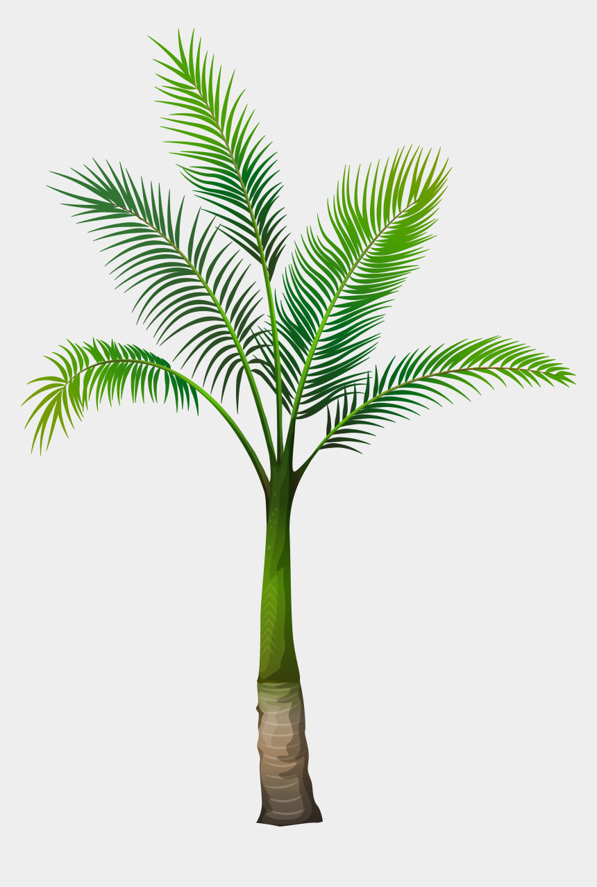 date palm clipart, Cartoons - Tree Png Images Hd