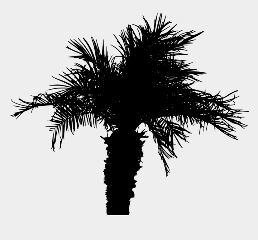 palm tree palms clipart, Cartoons - Portable Network Graphics
