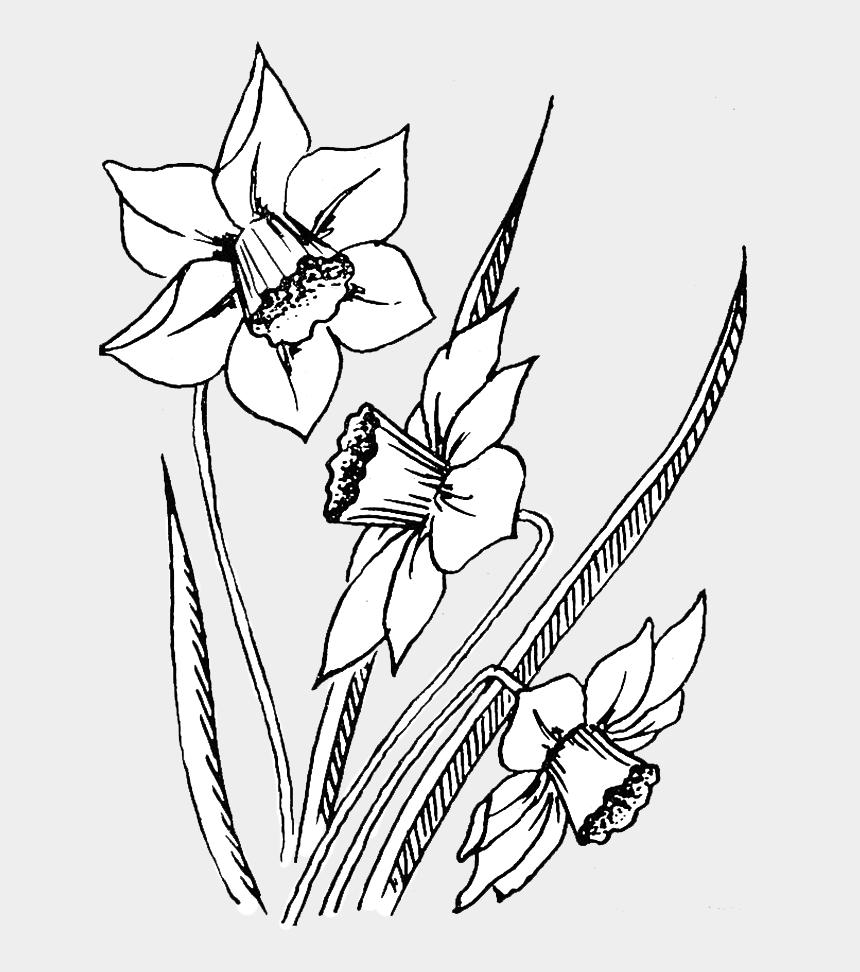indiana state flower clip art, Cartoons - Line Art