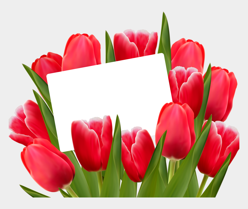tulip clipart, Cartoons - Red Tulips- Spring Clip Art - Red Tulips Png