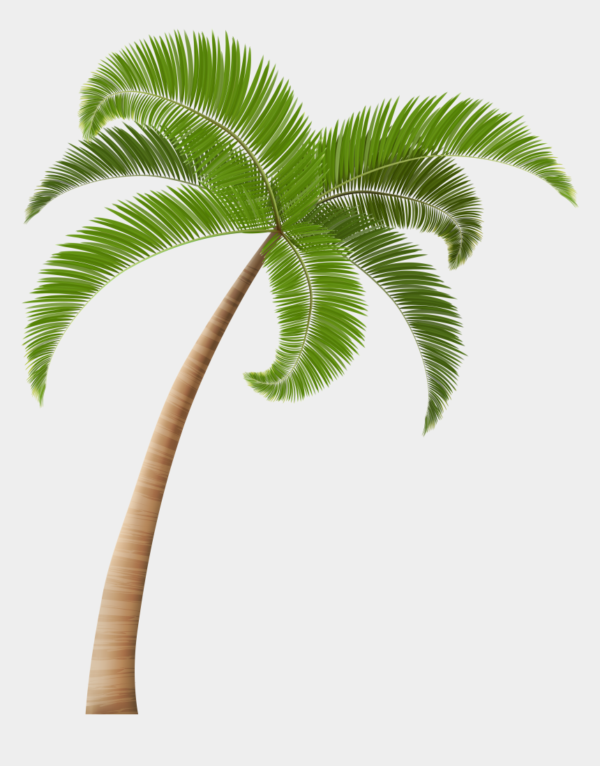 coconut clipart, Cartoons - Coconut Palm Tree Png - Transparent Background Coconut Tree Png