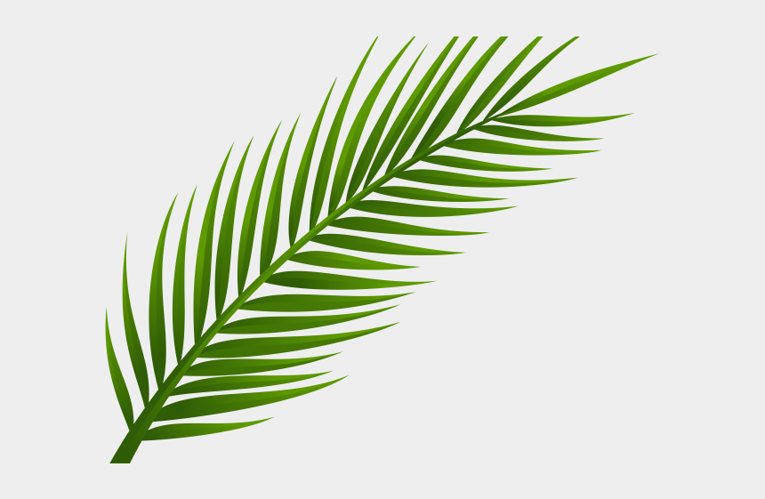 coconut clipart, Cartoons - Coconut Clipart Branch - Coconut Tree Leaves Png
